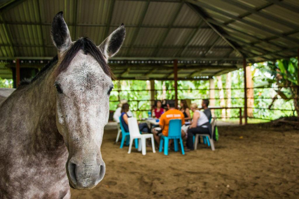 Les chevaux ressentent les émotions chevaux « Sans Attache », des chevaux et des humains libérés 2019 Photos Sans Attache for Press 56 Leila Pages 1024x683