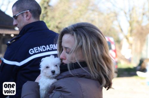 one voice One Voice, plus qu'une voix pour les animaux One Voice Muriel Arnal et chien sauvetage 500x330