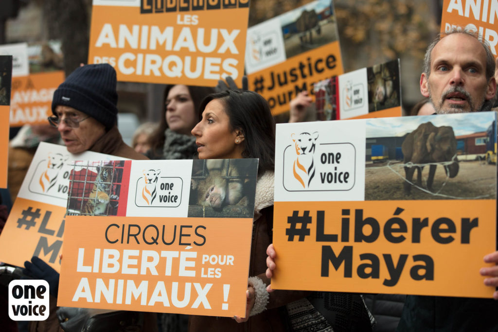 One Voice manifeste régulièrement pour alerter l'opinion publique one voice One Voice, plus qu'une voix pour les animaux One Voice Rassemblement Cirque pour Maya et Mevy 2 dec 2017  1024x683