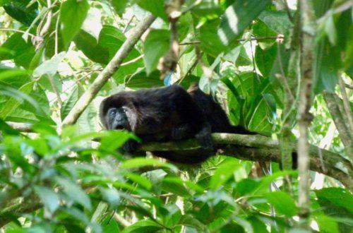 costa rica Droit des animaux au Costa Rica : un Eden sur terre? P1050360 500x330