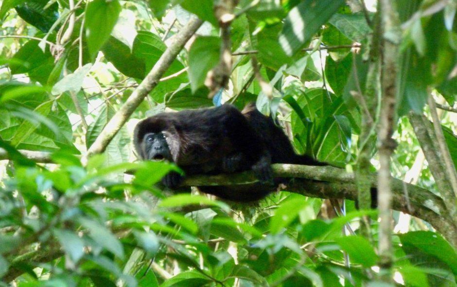 costa rica Droit des animaux au Costa Rica : un Eden sur terre? P1050360 940x590