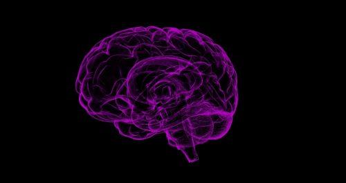 Et si nous apprenions à notre cerveau à sauver la planète ? cerveau Et si nous apprenions à notre cerveau à sauver la planète ? brain 1787622 1920 500x264