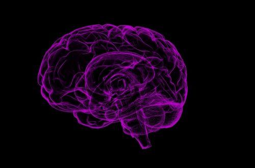 cerveau Et si nous apprenions à notre cerveau à sauver la planète ? brain 1787622 1920 500x330