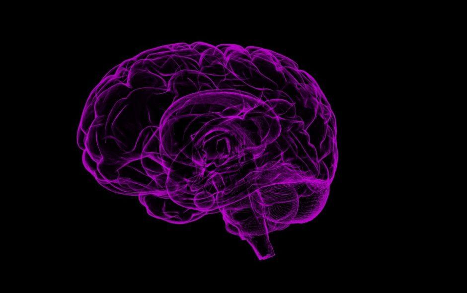 cerveau Et si nous apprenions à notre cerveau à sauver la planète ? brain 1787622 1920 940x590