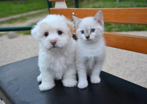 L'animal entre en politique animal L'animal entre en politique dog cat 2479948 1920 500x354