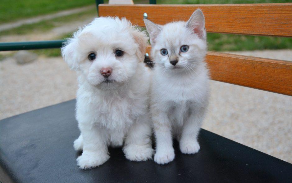 animal L'animal entre en politique dog cat 2479948 1920 940x590