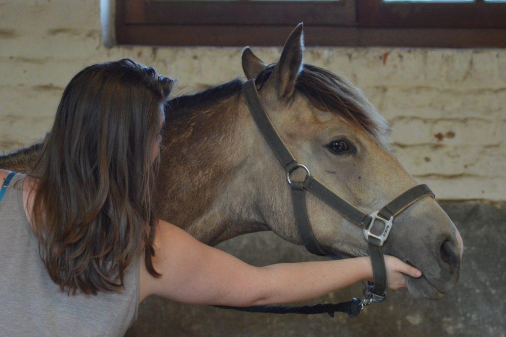 Shiatsu pour cheval shiatsu Rééquilibrer les énergies internes de mon animal grâce au shiatsu photo shiatsu 3 1024x681