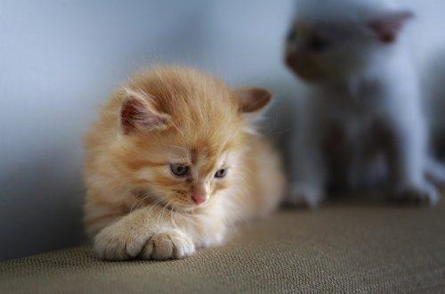 abandon Journée mondiale contre l'abandon des animaux de compagnie cat 3266671 640 500x330