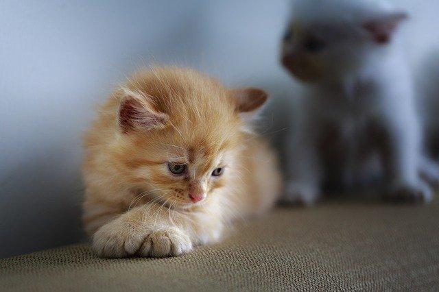 abandon Journée mondiale contre l'abandon des animaux de compagnie cat 3266671 640