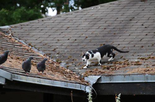 chat Faut-il enfermer son chat pour sauver les oiseaux? cat 4249956 640 500x330