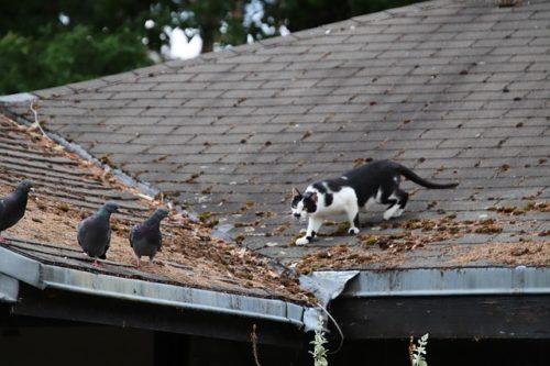 Faut-il enfermer son chat pour sauver les oiseaux? chat Faut-il enfermer son chat pour sauver les oiseaux? cat 4249956 640 500x333