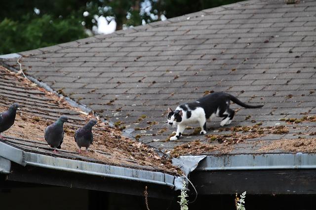 chat Faut-il enfermer son chat pour sauver les oiseaux? cat 4249956 640