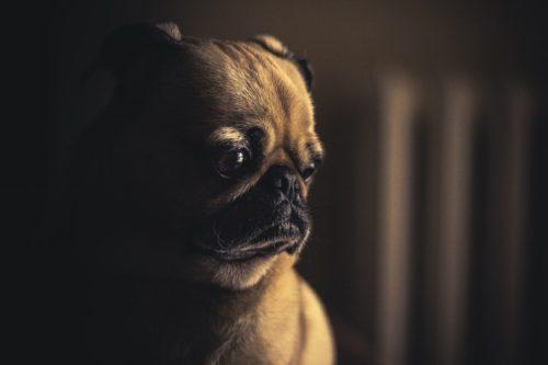 Maltraitance sur animaux : mais que fait la justice? maltraitance animale Maltraitance sur animaux : mais que fait la justice? dog 690176 1280 500x333