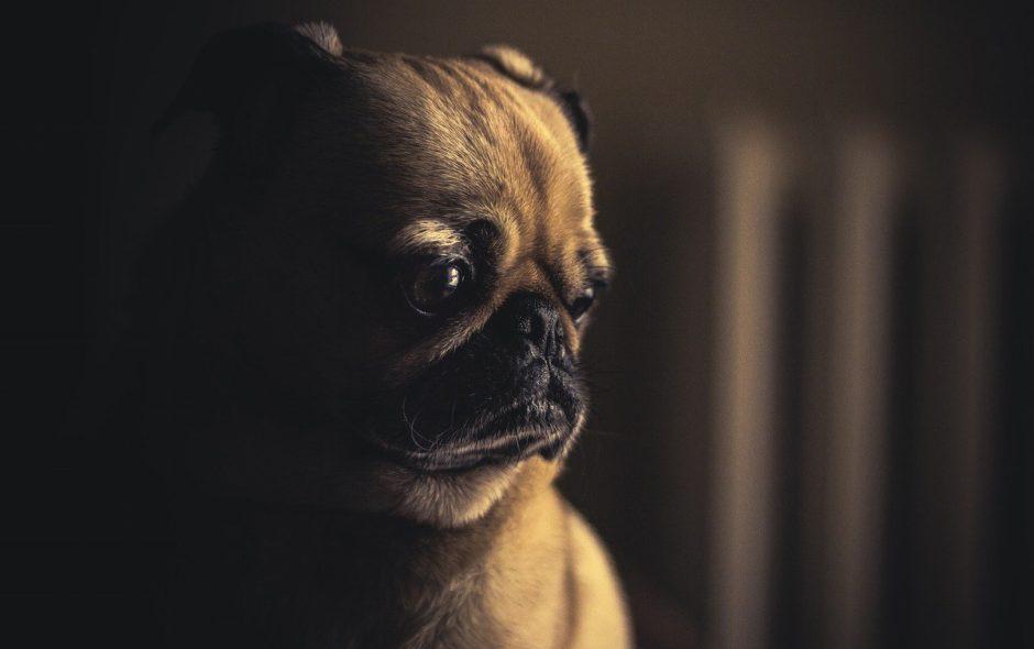 maltraitance animale Maltraitance sur animaux : mais que fait la justice? dog 690176 1280 940x590