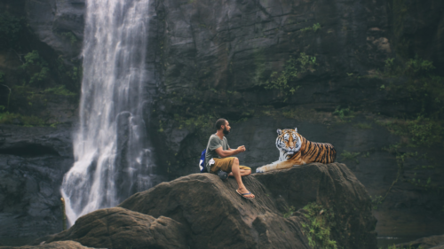 Non aux selfies avec les animaux sauvages selfie Non aux selfies avec les animaux sauvages tiger 3158635 1280 500x281