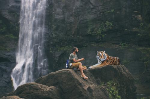 selfie Non aux selfies avec les animaux sauvages tiger 3158635 1280 500x330