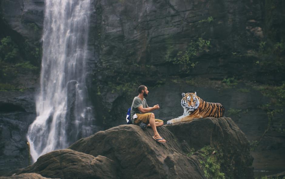 selfie Non aux selfies avec les animaux sauvages tiger 3158635 1280 940x590
