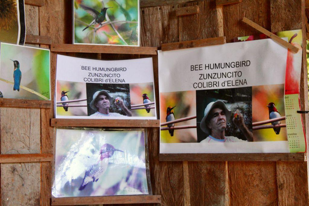 colibri Sur la piste du plus petit oiseau au monde Chez Bernabe   1024x683