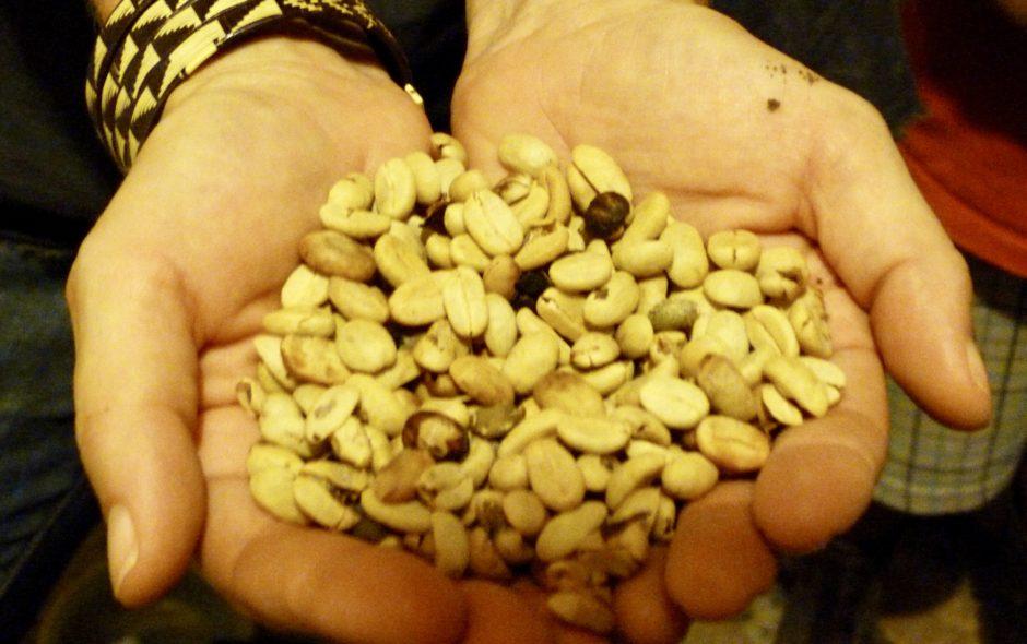 costa rica La bataille du café bio au Costa Rica P1050502 940x590
