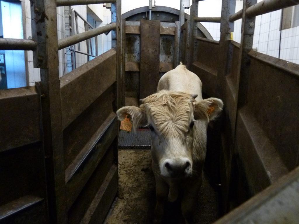 animaux L'OABA, au secours des animaux de ferme depuis 55 ans Abattoir 1024x768
