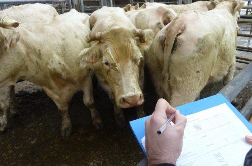 animaux L'OABA, au secours des animaux de ferme depuis 55 ans Audit 500x330