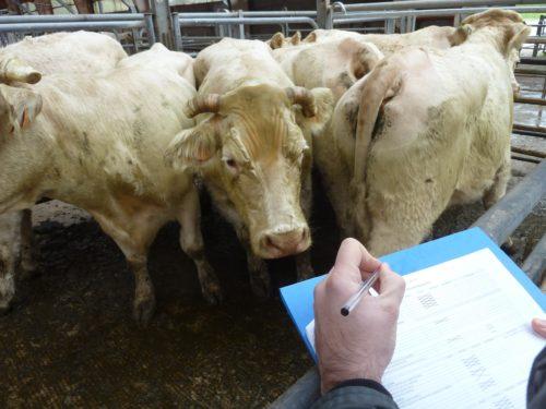 L'OABA, au secours des animaux de ferme depuis 55 ans animaux L'OABA, au secours des animaux de ferme depuis 55 ans Audit 500x375