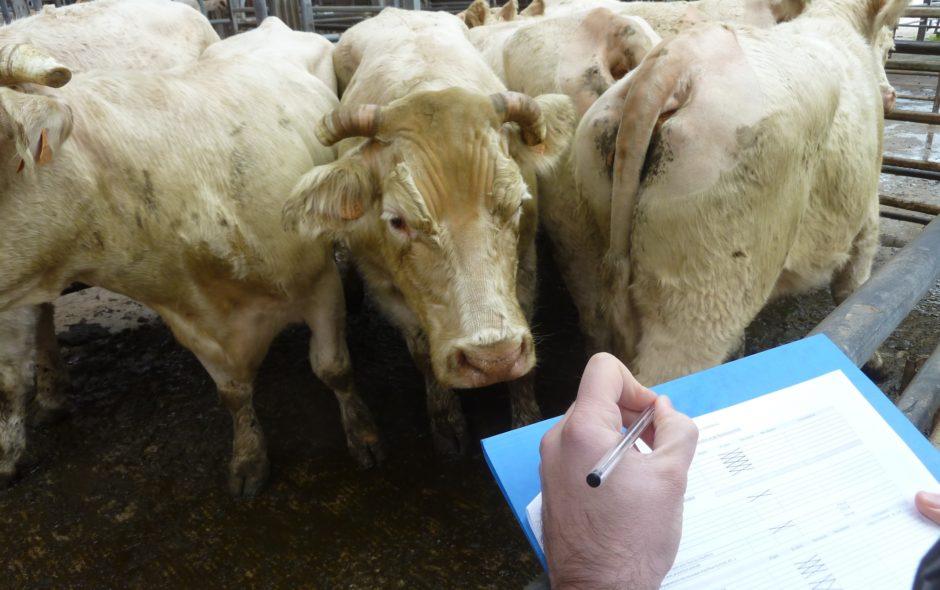 animaux L'OABA, au secours des animaux de ferme depuis 55 ans Audit 940x590