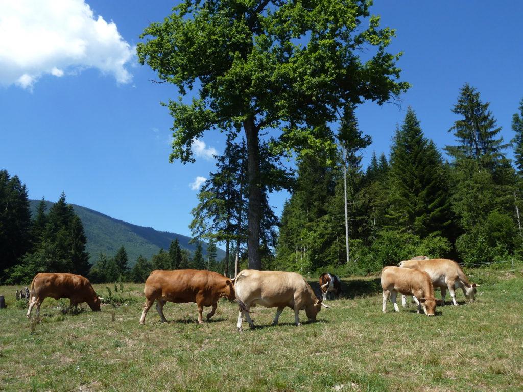 animaux L'OABA, au secours des animaux de ferme depuis 55 ans Photo 1 1024x768