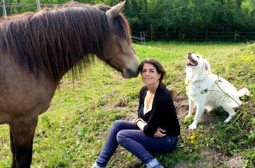 animaux Peut-on être « amis » avec les animaux? 20200510 114416 500x330