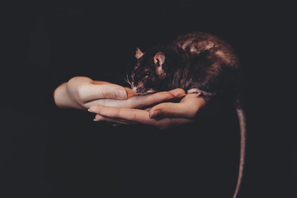 animaux Peut-on être « amis » avec les animaux? animals 2939607 1920 1024x683