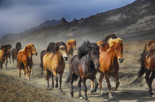 animaux Défenseurs des animaux de tous horizons, unissez-vous! horses 2360048 1920 500x330