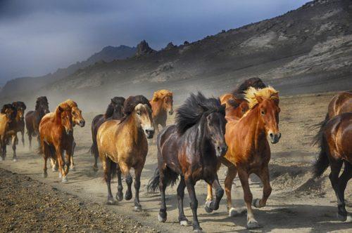 Défenseurs des animaux de tous horizons, unissez-vous! animaux Défenseurs des animaux de tous horizons, unissez-vous! horses 2360048 1920 500x332