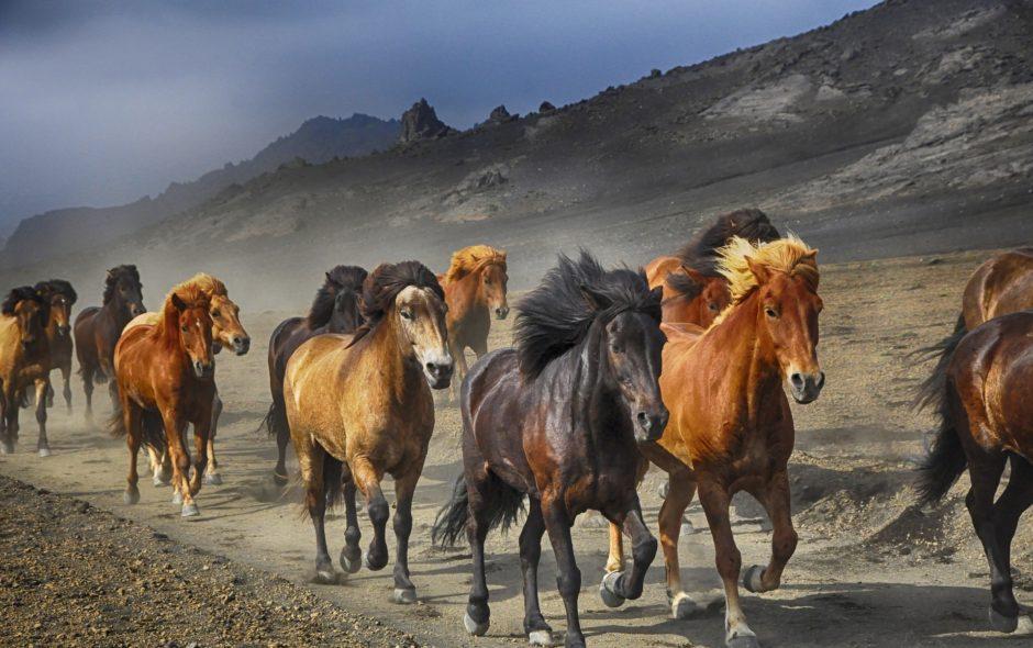 animaux Défenseurs des animaux de tous horizons, unissez-vous! horses 2360048 1920 940x590