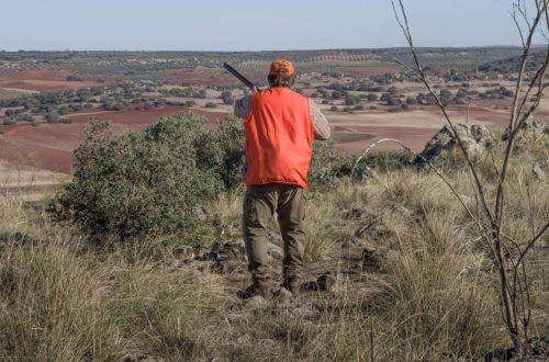 violence Chasse : des questions qui restent sans réponses hunting 4626664 1280 500x330